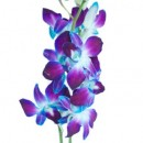 Orchid-Bombay-Turquiose-Close-350